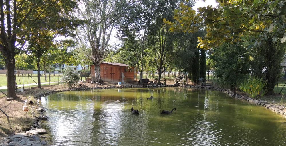 vista laghetto parco cigni polisportivalevata.it